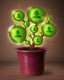 Социальное дерево сети приходя из цветочного горшка Стоковая Фотография