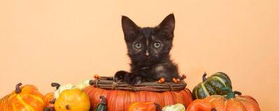 Социальный сбор осени котенка знамени средств массовой информации Стоковое фото RF