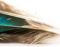 сочинитель принципиальной схемы птицы помещенный пером белый Стоковая Фотография