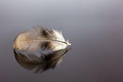 сочинитель принципиальной схемы птицы помещенный пером белый Стоковое Изображение RF