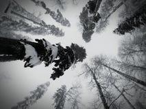 Сочи Стоковая Фотография RF