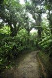 Сочная, зеленая листва окружает многочисленные пешие тропы в лесе облака Monteverde в Коста-Рика стоковое фото rf