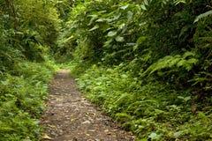 Сочная, зеленая листва окружает многочисленные пешие тропы в лесе облака Monteverde в Коста-Рика стоковые фотографии rf