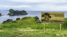 Сочная зеленая трава на бухте собора, coromandel, Новой Зеландии 11 Стоковое Изображение RF