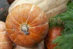 Сочная оранжевая тыква в куче на рынке стоковая фотография rf