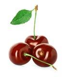Сочная сладостная вишня при лист изолированные на белизне Стоковая Фотография