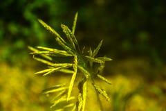 Сочная трава в поле лета Стоковое Изображение RF