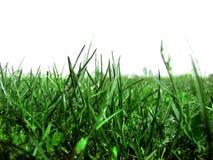 сочная трава на белой предпосылке одном стоковые фото