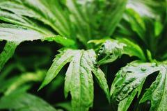 Сочное зеленое растение, Стоковые Фотографии RF