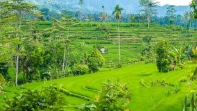 Сочное зеленое tarrace риса в Sidemen bali Индонесия Стоковая Фотография RF