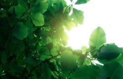 Сочное листво стоковая фотография rf