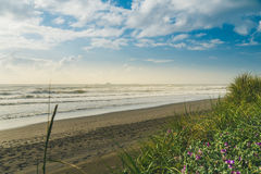 Сочное побережье Орегона Стоковое фото RF