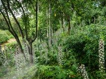 Сочное растущее цветков в зеленом саде стоковые изображения