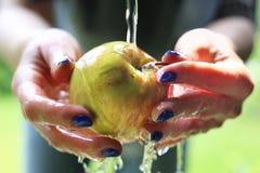 Сочное яблоко прямо от дерева Стоковое Изображение RF
