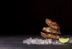 Сочные закрытые устрицы на черной предпосылке Очень вкусная тропическая наяда моря с кристаллическим охлаждает лед и этап известк Стоковые Изображения RF