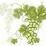 Сочные зеленые виноградины EPS10 Стоковая Фотография RF