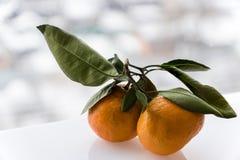 Сочные оранжевые tangerines на defocused белизны предпосылке outdoors Стоковая Фотография