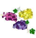 Сочные, очень вкусные и свежие сжатые виноградины Стоковое Изображение