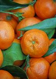 Сочные помераец и tangerines для сбывания на vegetable рынке Стоковое Фото