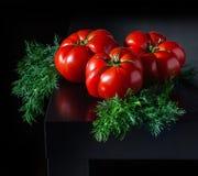 Сочные томаты с укропом на деревянной темной предпосылке Стоковые Фото