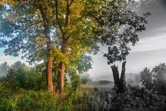 Сочный дуб в лете около старого мертвого дерева Старея, родные потеря, экологичность, единение и одиночество, концепции подачи вр Стоковое Фото