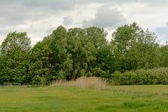 Сочный зеленый ландшафт болота с деревьями во фламандской сельской местности стоковая фотография