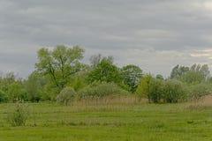 Сочный зеленый ландшафт болота с деревьями во фламандской сельской местности стоковое изображение rf