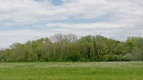 Сочный зеленый ландшафт болота с деревьями во фламандской сельской местности стоковое фото rf