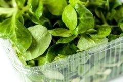 Сочный зеленый шпинат в прозрачном контейнере стоковое изображение