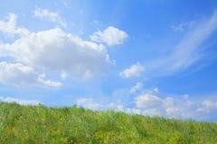 Сочный, зеленый ландшафт с голубым небом и облака. стоковые изображения
