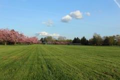 Сочный зеленый взгляд поля с предпосылкой голубого неба Стоковое Фото