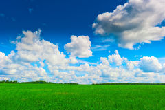 Сочный зеленый выгон и красивое небо стоковые изображения rf