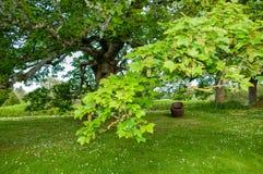 Сочный зеленый парк Стоковые Фото