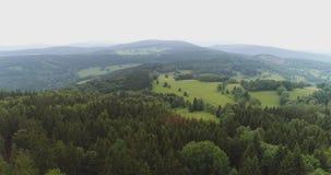 Сочный лес против неба сток-видео