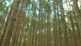 Сочный лес против неба видеоматериал