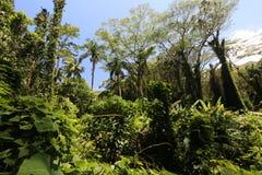 Сочный дождевый лес Стоковое фото RF