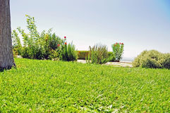 Сочный повышенный сад с розмариновым маслом и кустами роз Стоковое Изображение