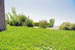Сочный повышенный сад с розмариновым маслом и кустами роз Стоковая Фотография