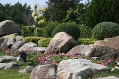 Сочный цветок красивый с камнем Стоковая Фотография RF