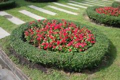 Сочный цветок красивый с солнечным светом Стоковая Фотография RF