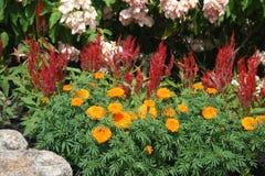 Сочный цветок красивый Стоковое Изображение