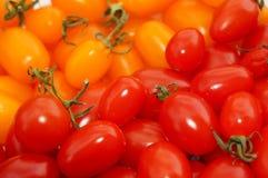 2 сочных зрелых томата на ветви в парнике Стоковое Изображение