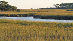 Соленое болото Южной Каролины Стоковая Фотография