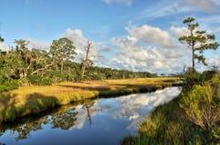 Соленое болото Стоковая Фотография