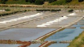 Соленые болота в Noirmoutier стоковая фотография