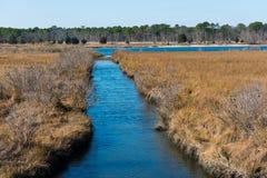 Соленые болота Стоковые Изображения