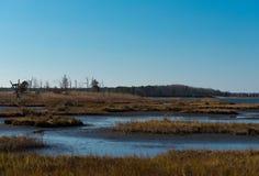 Соленые болота Стоковое Изображение RF