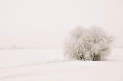 Солитарное дерево в снеге Стоковые Фото