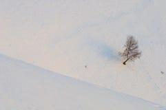 Солитарное дерево Стоковые Изображения RF