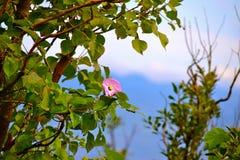 Солитарное цветение Стоковые Изображения